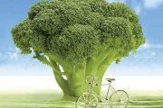 در روزهای آلوده چه بخوریم ، چه نخوریم؟