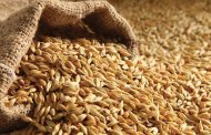 خواص جو (Barley)