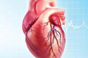 زنجبیل ارگانیک و بیماری های قلبی