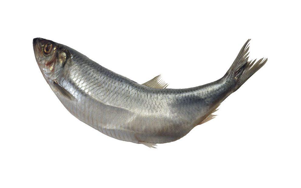 کالری ماهی ها