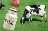 شیر گاو و حساسیت