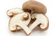 قارچ و خواص آن