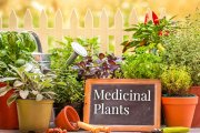گیاهان دارویی مناسب برای کنترل علائم یائسگی