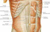 از شکم خود چه می دانید ؟