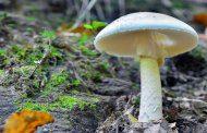 مراقب مسمومیت با قارچ ها باشید