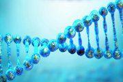 کبد چرب و ژنتیک