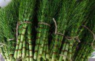 گیاهان دارویی مفید برای سه ماهه دوم