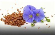مزایای مصرف تخم کتان برای بدن